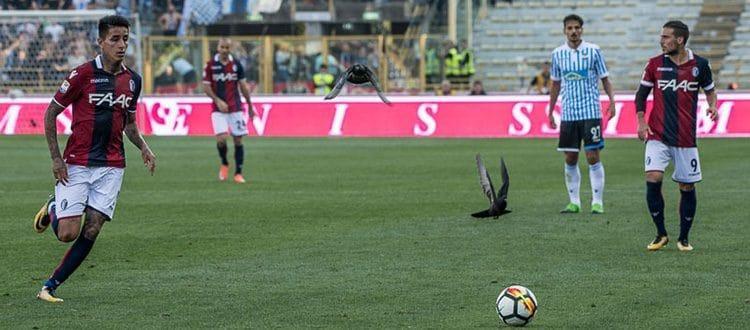 Pulgar ce la fa, per Bologna-Benevento fuori dai convocati Avenatti, Keita e Taider
